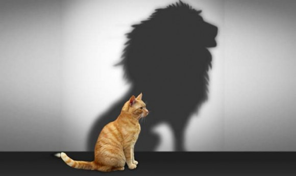 cat with a lion as a shadow